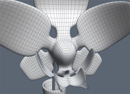 modelisation orchidee